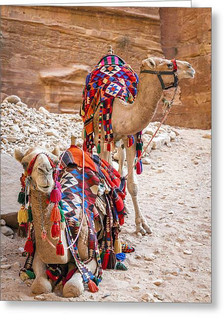 Camels In Petra Greeting Card by Alexey Stiop