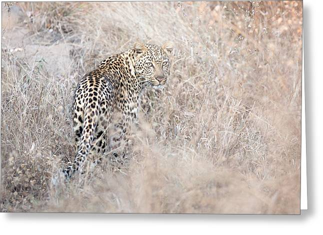 Camouflaged Leopard Greeting Card by Christa Niederer