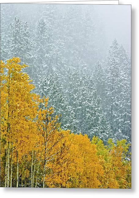 Canada, Alberta, Banff National Park Greeting Card by Jaynes Gallery
