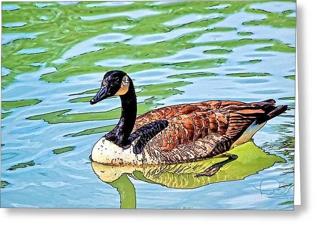 Greeting Card featuring the photograph Canada Goose by Ludwig Keck