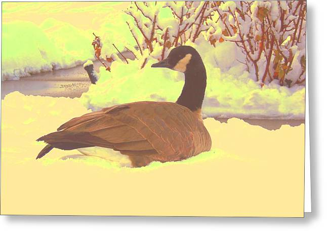 Greeting Card featuring the pyrography Canadian Goose by Larry Campbell
