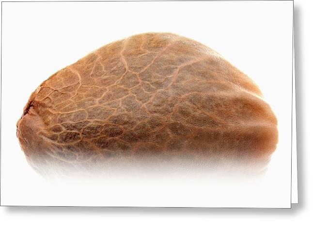 Cannabis Seed Greeting Card by Antonio Romero