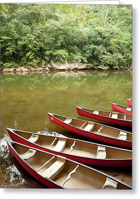 Canoeing The Macal River In Jungle Area Greeting Card