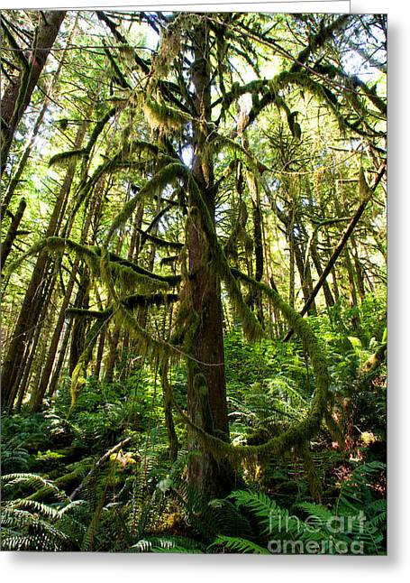 Capilano River Canyon 10 Greeting Card by Terry Elniski