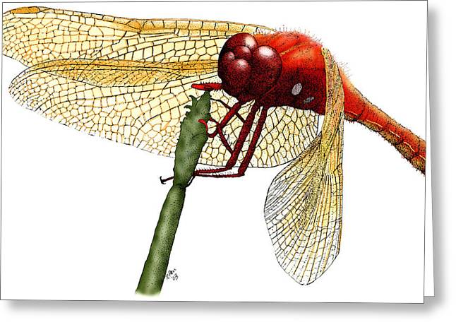 Cardinal Meadowhawk Dragonfly Greeting Card by Roger Hall