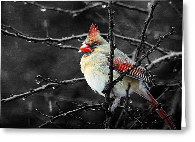 Greeting Card featuring the photograph Cardinal On A Rainy Day by Trina  Ansel