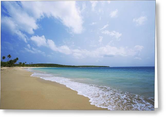 Caribbean, Puerto Rico, Vieques Island Greeting Card