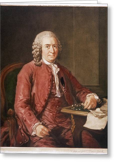 Carl Von Linne Known As Linnaeus Greeting Card by Mary Evans Picture Library