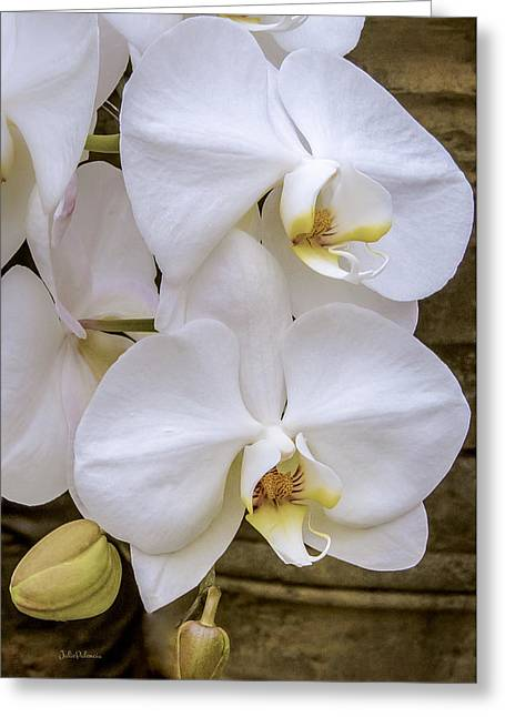 Cascade Of White Orchids Greeting Card by Julie Palencia