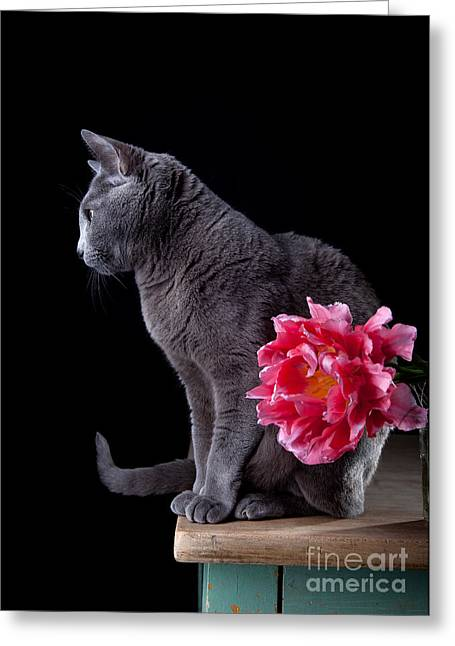 Cat And Tulip Greeting Card by Nailia Schwarz