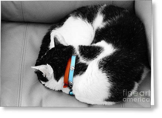 cat Greeting Card by Bobby Mandal