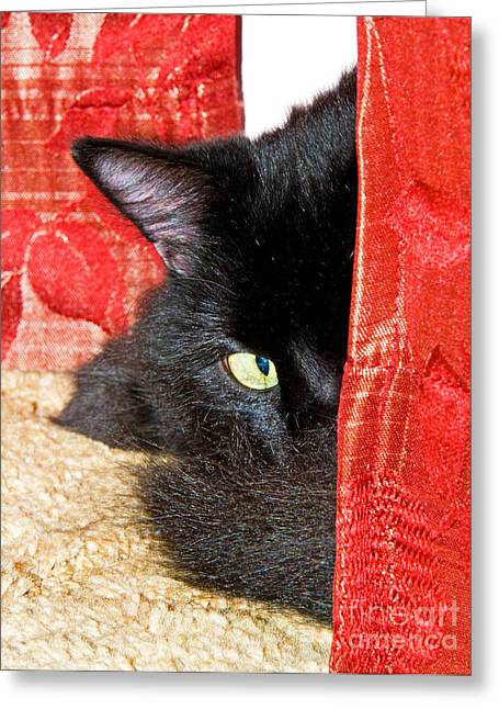 Cat Hiding Behind Drapes Greeting Card by Millard H. Sharp