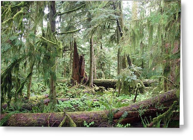 Greeting Card featuring the photograph Cathedral Grove by Marilyn Wilson