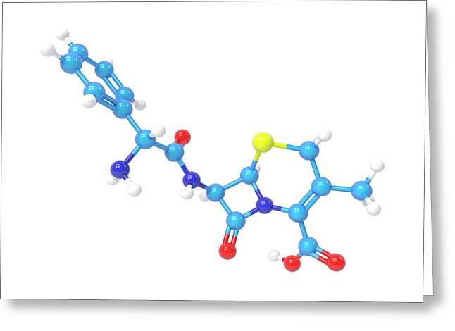 Cefalexin Molecule Greeting Card by Indigo Molecular Images