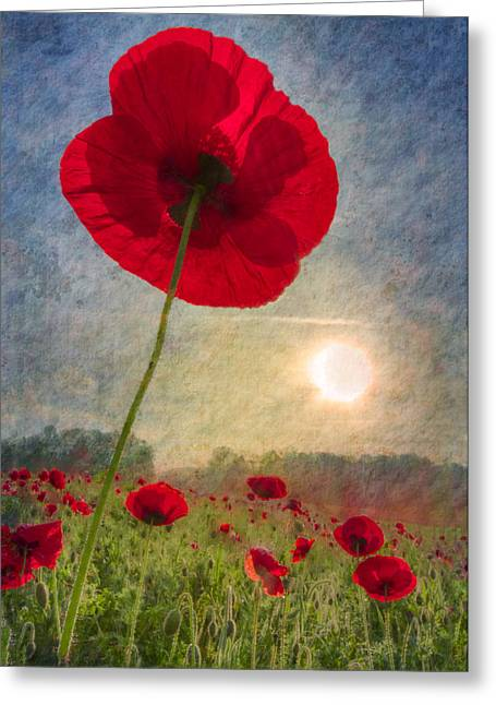 Celebrate The Day Greeting Card