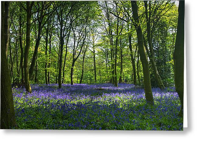 Chalet Wood Wanstead Park Bluebells Greeting Card