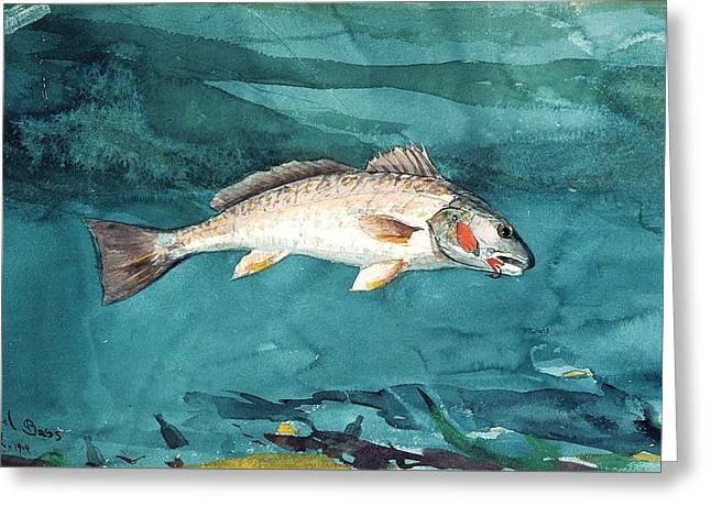 Channel Bass Greeting Card