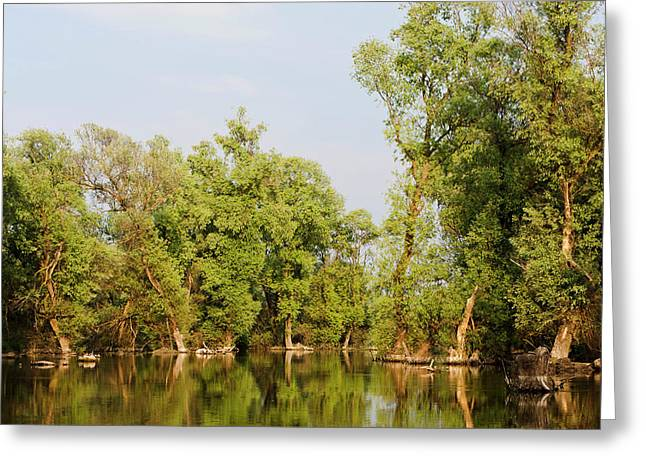 Channels And Lakes In The Danube Delta Greeting Card by Martin Zwick