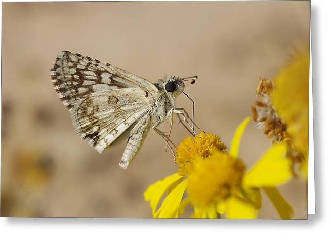 Checkered Skipper Greeting Card by Billy  Griffis Jr
