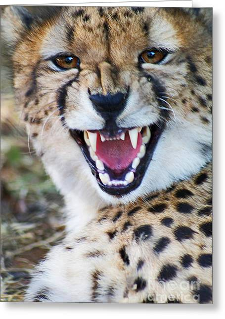 Cheetah With Attitude Greeting Card by Stanza Widen