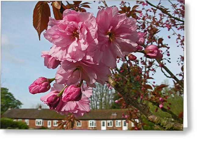 Cherry Blossom Spring Greeting Card