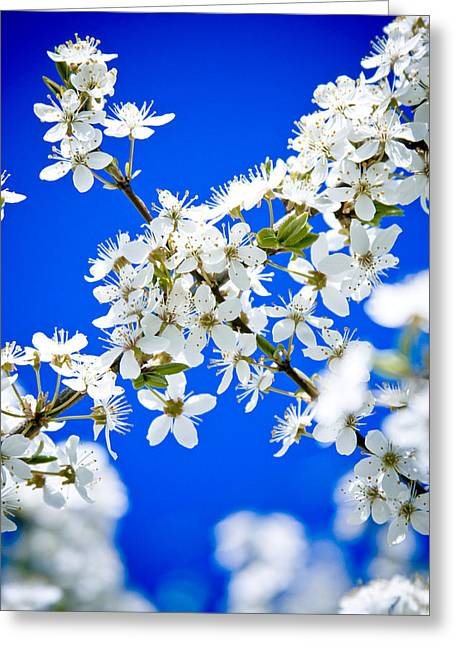 Cherry Blossom With Blue Sky Greeting Card