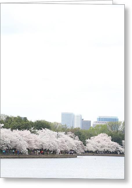 Cherry Blossoms - Washington Dc - 011314 Greeting Card