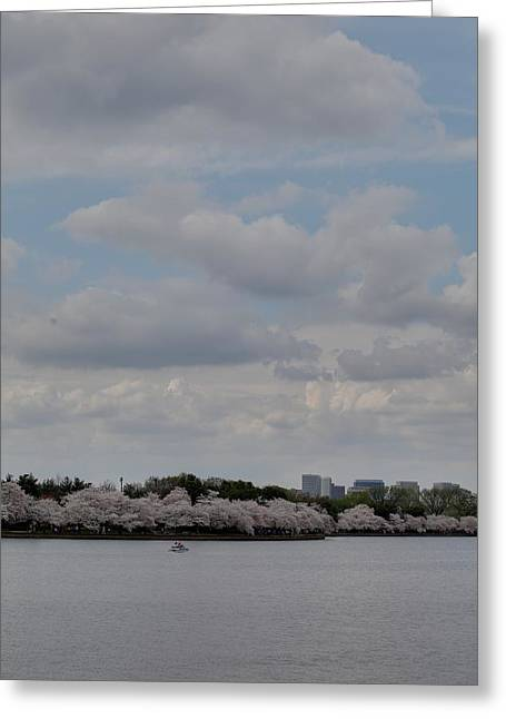 Cherry Blossoms - Washington Dc - 011324 Greeting Card by DC Photographer