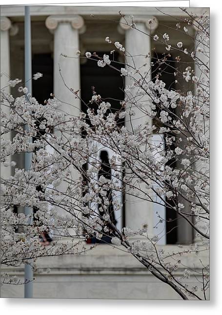 Cherry Blossoms With Jefferson Memorial - Washington Dc - 01131 Greeting Card by DC Photographer