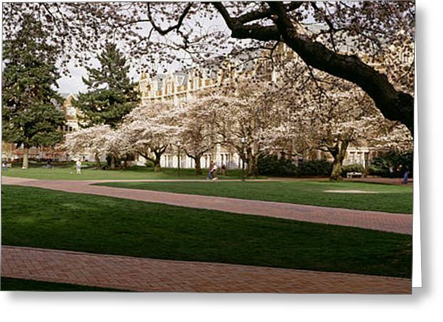 Cherry Trees In The Quad Greeting Card by Panoramic Images