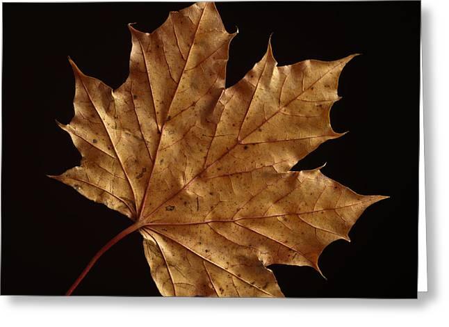 Chestnut Leaf Greeting Card