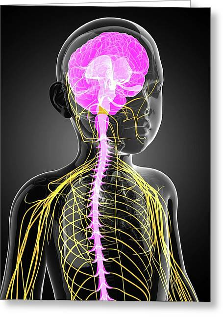 Child's Central Nervous System Greeting Card