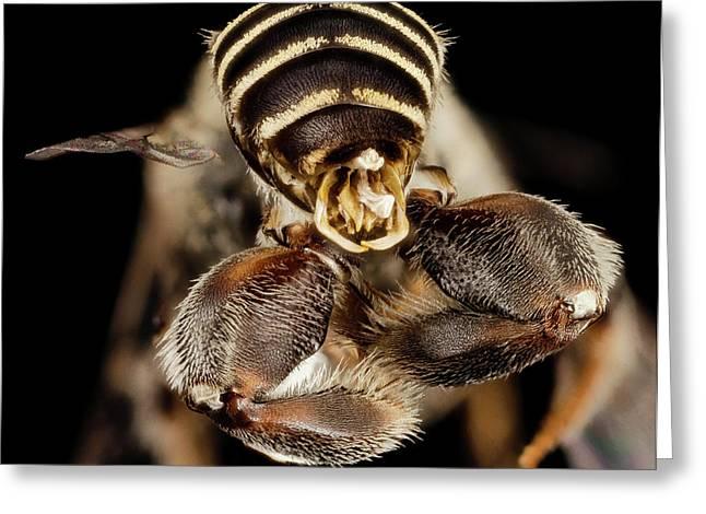Chimney Bee Greeting Card