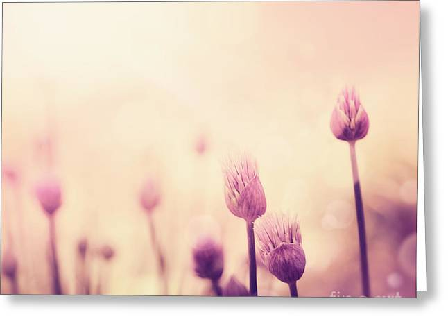 Chives Flowers Greeting Card by Mythja  Photography