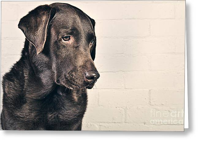 Chocolate Labrador Profile Greeting Card by Justin Paget
