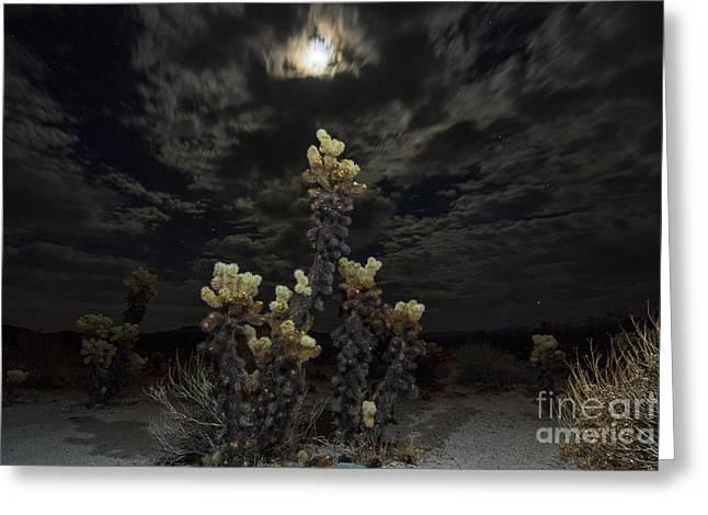 Cholla Light - Joshua Tree National Park Greeting Card by Jamie Pham