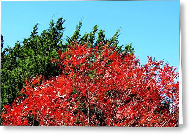 Christmas Color Greeting Card by David  Norman