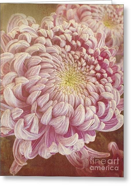 Chrysanthemum Greeting Card by Elena Nosyreva