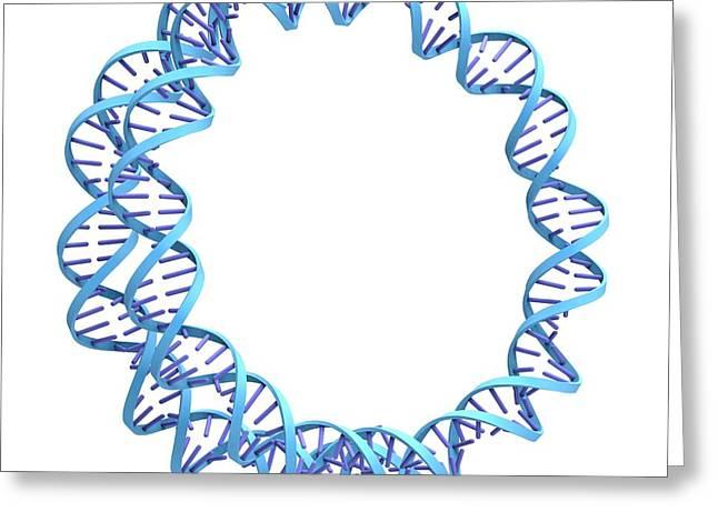 Circular Dna Molecule Greeting Card