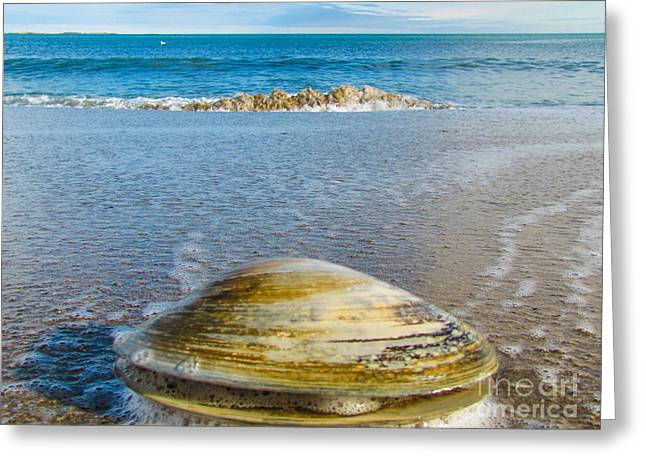 Clam's Point Of View Greeting Card by Joe Faragalli