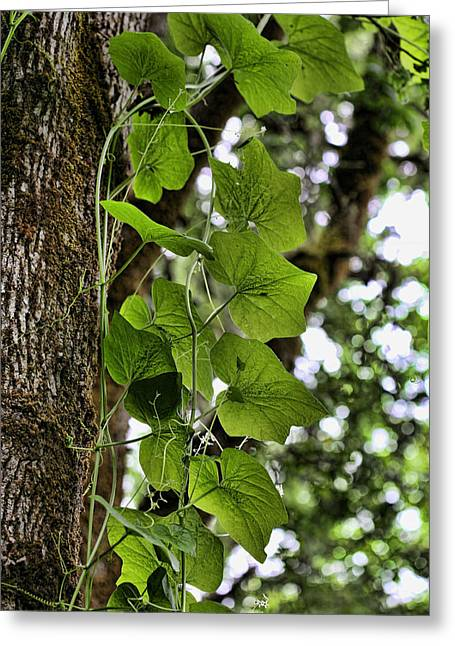 Climbing Vine Greeting Card by Bonnie Bruno