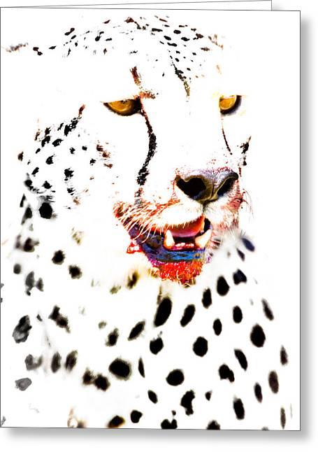 Close-up Of A Cheetah, Ngorongoro Greeting Card by Panoramic Images