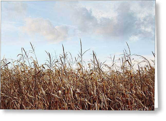 Greeting Card featuring the photograph Closeup Of Corn Stalks  by Sandra Cunningham