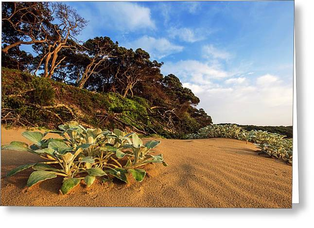 Coastal Forest Greeting Card by Peter Chadwick