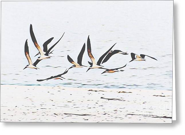 Coastal Skimmers Greeting Card