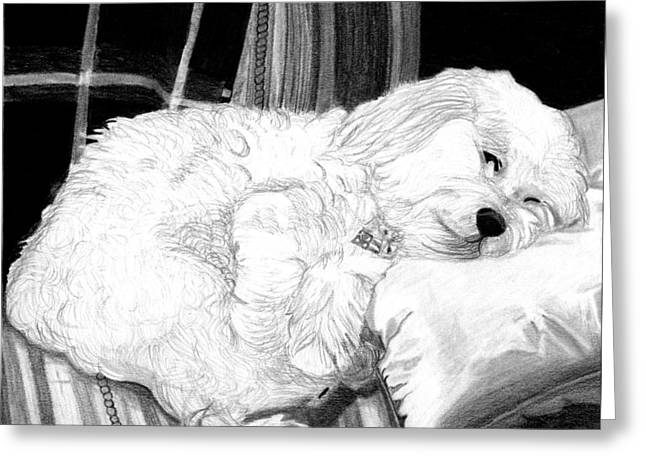 Cockapoo Dog Portrait   Greeting Card by Olde Time  Mercantile