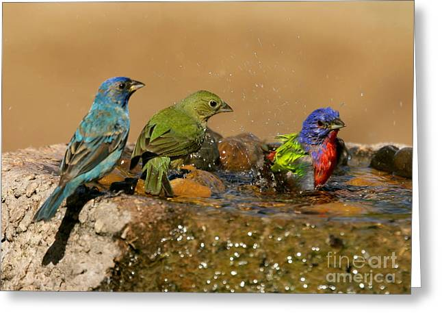 Colorful Bathtime Greeting Card