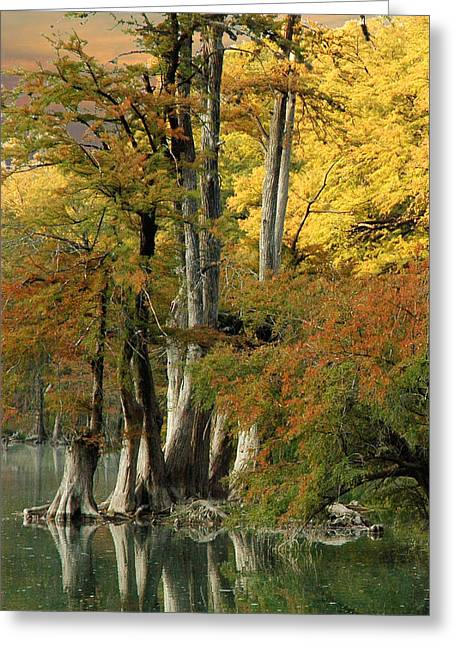 Colorful Cypress Greeting Card by Robert Anschutz