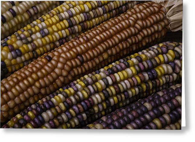 Colorful Indian Corn Greeting Card by Garry Gay