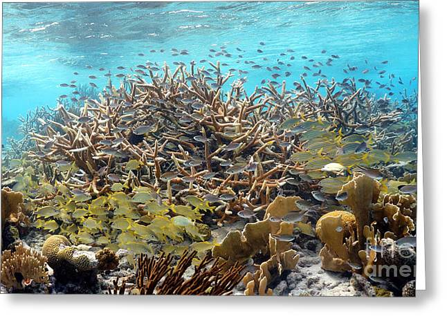 Colorful Tropical Reef Greeting Card